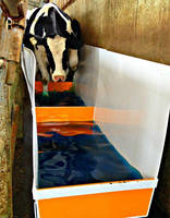 Bovine Footbath helps prevent hoof disease on farms.