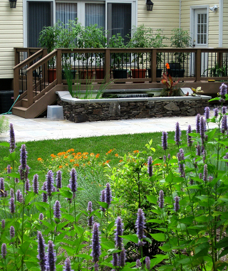 Habitat garden by John Magee Vienna Va.