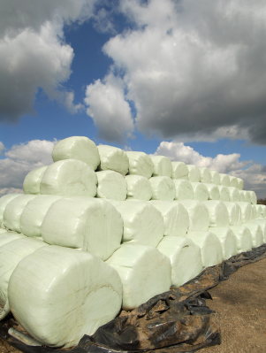 Low-Density Polyethylene Foam