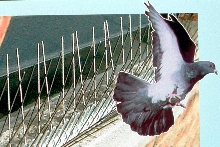 Barriers stop birds from roosting.