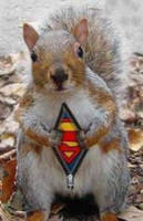 Data Centers Under Attack-From Tree Squirrels!