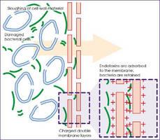 Nylon Membrane Filter helps reduce endotoxins.