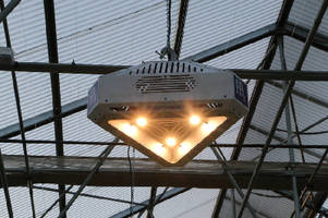LED Light turns night into day for growers.