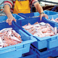Canadian Fish Processors Respond to New Temperature Monitoring Regulations with Data Logging