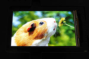 TFT-HD 5.5 Inch AMOLED Display features On-Cell Touch technology.