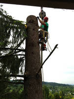 Tree Service Company Uses Load Cell During Tree Care Operations
