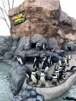 Adventure Aquarium Penguin Park Expands with the Help of an Easi-Set Building