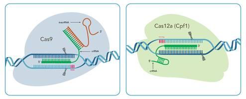 IDT Showcases CRISPR Expertise in Europe