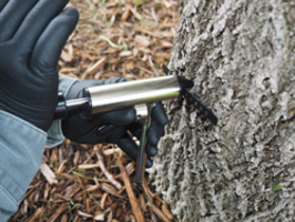 New SpeedChek Punch from ArborSystems Can Be Used with the Wedgle Direct-Inject Tree Injection System
