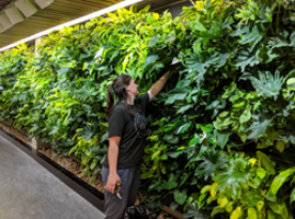 LiveWall Living Wall is The Green Centerpiece in The Re-designed Interior of The Bata Library at Trent University
