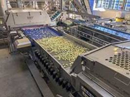 New Sorting System Integrates Iso-Flo Shakers