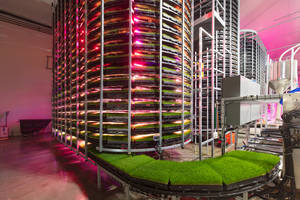 New Vertical Farming System is Suitable for Dairy and Beef Cattle Feed