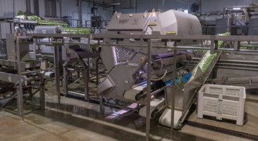 New Automated Grading System Automatically Removes Defective Green Beans