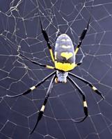 Malvern Rheometer Helps Oxford Scientists Unravel Secrets of Silk