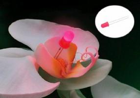 Fluorescent Pink LEDs produce 80 mcd illumination.