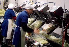 Packaging Machine consistently seals fresh-cut produce bags.