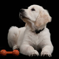 Thermoplastic Elastomers target pet products industry.