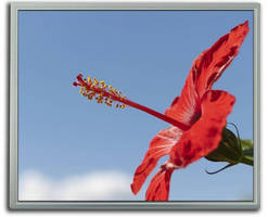 TFT LCDs can be read in high-ambient light environments.