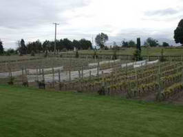 Temperature Monitoring a Vineyard's Microclimate
