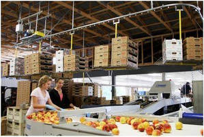 Overhead Carton Delivery System Improves Food Safety and Productivity